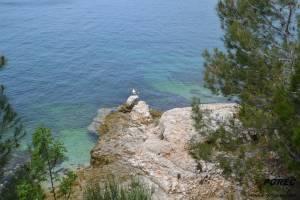 Möve in der Blauen Lagune